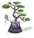 bonsai-03c-giaistologio-04