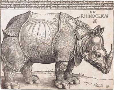 plialiamixaila-rinokeros-eikonaalbrecht-durer-the_rhinoceros